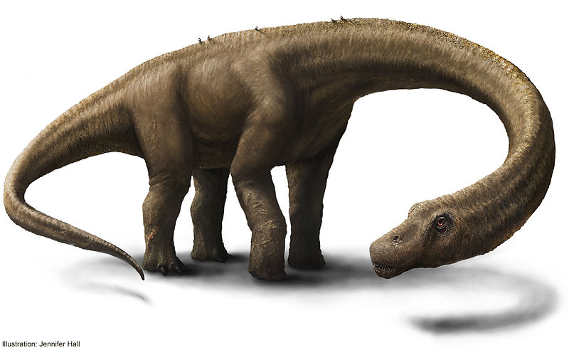 Artist's illustration of the dinosaur Dreadnoughtus. Credit: Jennifer Hall