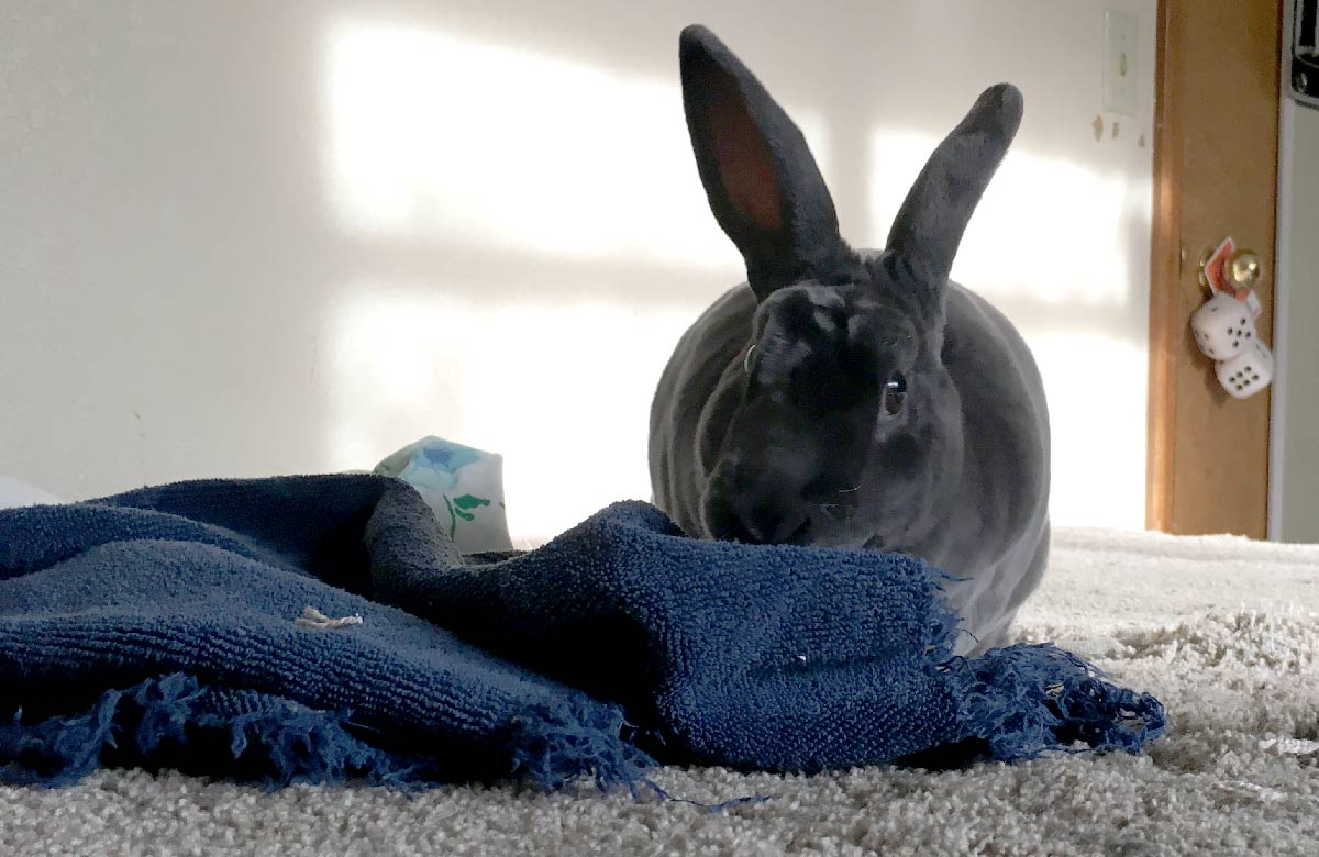 Smokey the Rabbit | Credit: Joan Cartan-Hansen