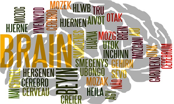 Saying Brain, from around the world