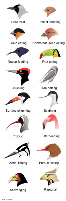 variety of bird beaks
