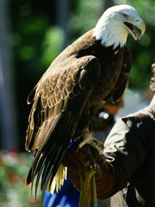 Birds Of Prey Facts Science Trek Idaho Public Television