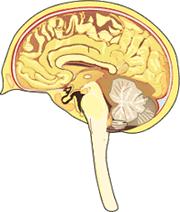 The Brain: Facts (Science Trek: Idaho Public Television)