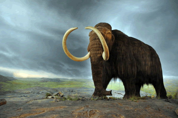 Woolly mammoth [Credit: Flying Puffin, Wikimedia Commons]