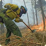 A person fighting a wildfire
